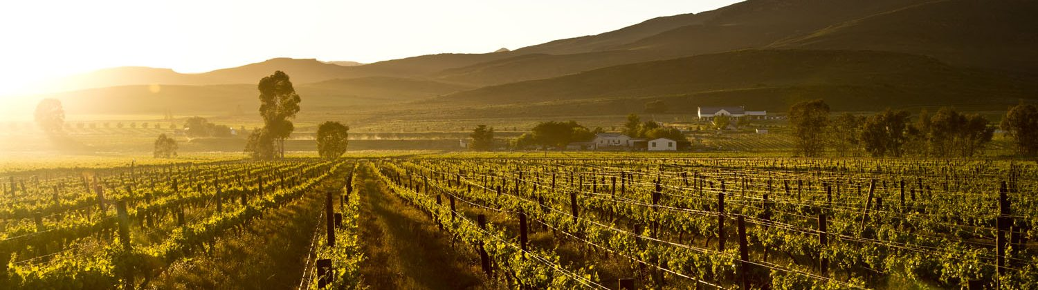 New Cape Wines home of Arendskloof and Eagles Cliff